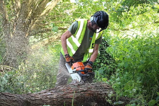 Tree services near me in Oxfordshire