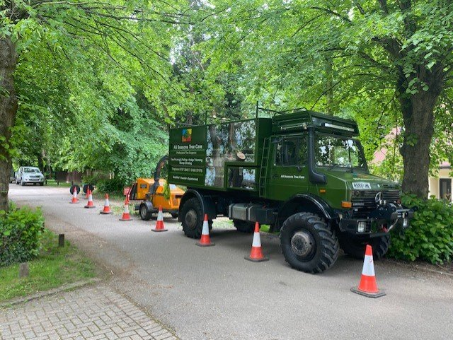 Tree services Henley on Thames